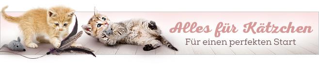 Alles für Kitten und junge Kätzchen