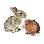 Occasioni per piccoli animali