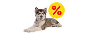 Tilbud til hunde