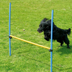 Agility & Training