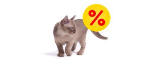 Tilbud til katte