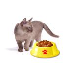 Neues Futter und Leckerli für Katzen