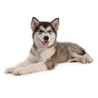Schnäppchenecke für Hunde