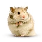 Alles für Hamster