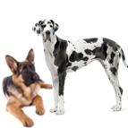 Futter für grosse Hunderassen