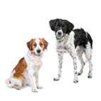 Futter für mittelgrosse Hunderassen