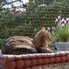 Katzennetz & Fensterschutz für Kitten